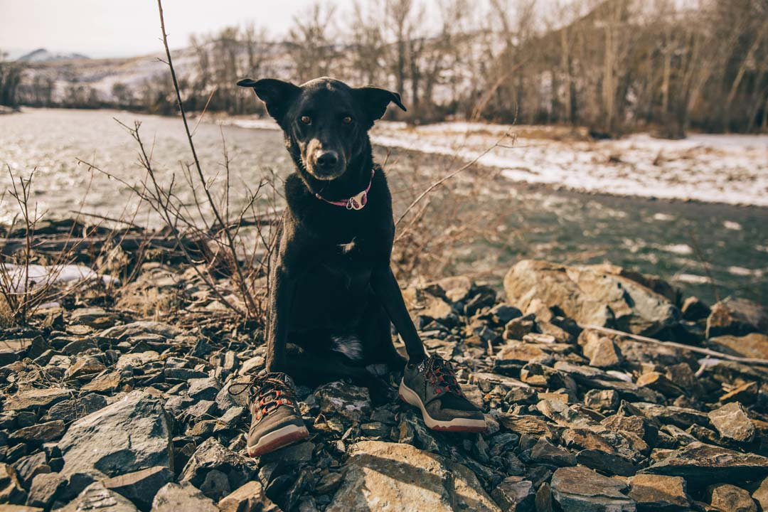Andy Cochrane's black dog, Bea, wears his Teva Arrowood waterproof sneakerboots near a river.