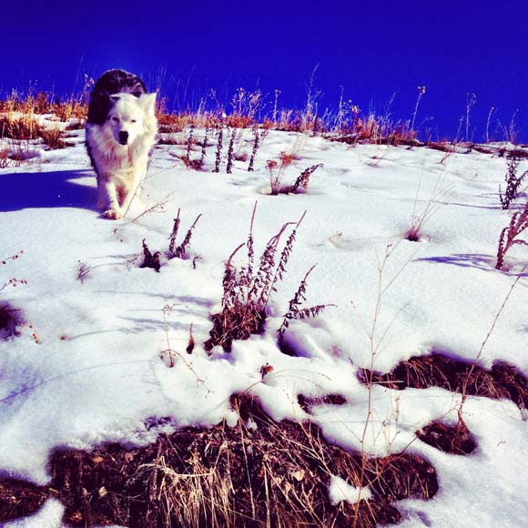 trail running dog