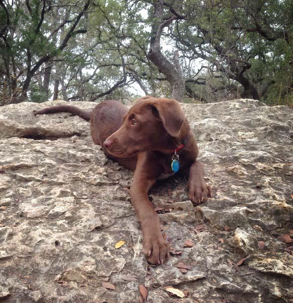 Outdoor dog
