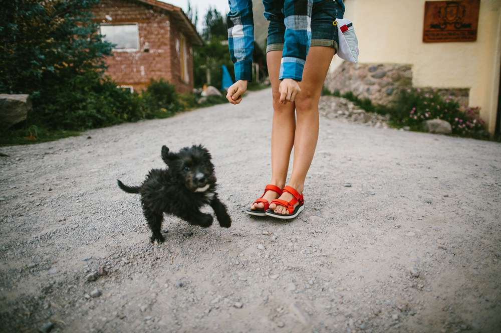 Puppy running by pair of legs wearing sandals