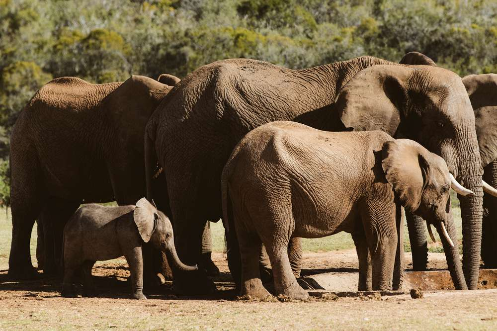 south_africa_3554