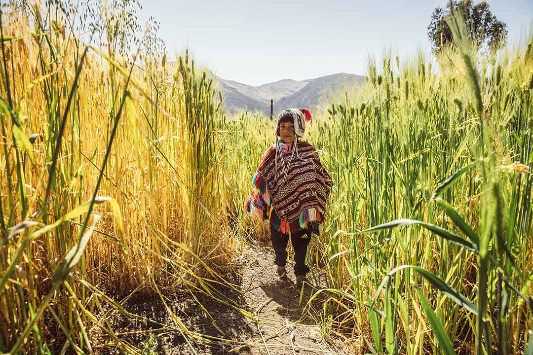 A Peruvian boy in a field.