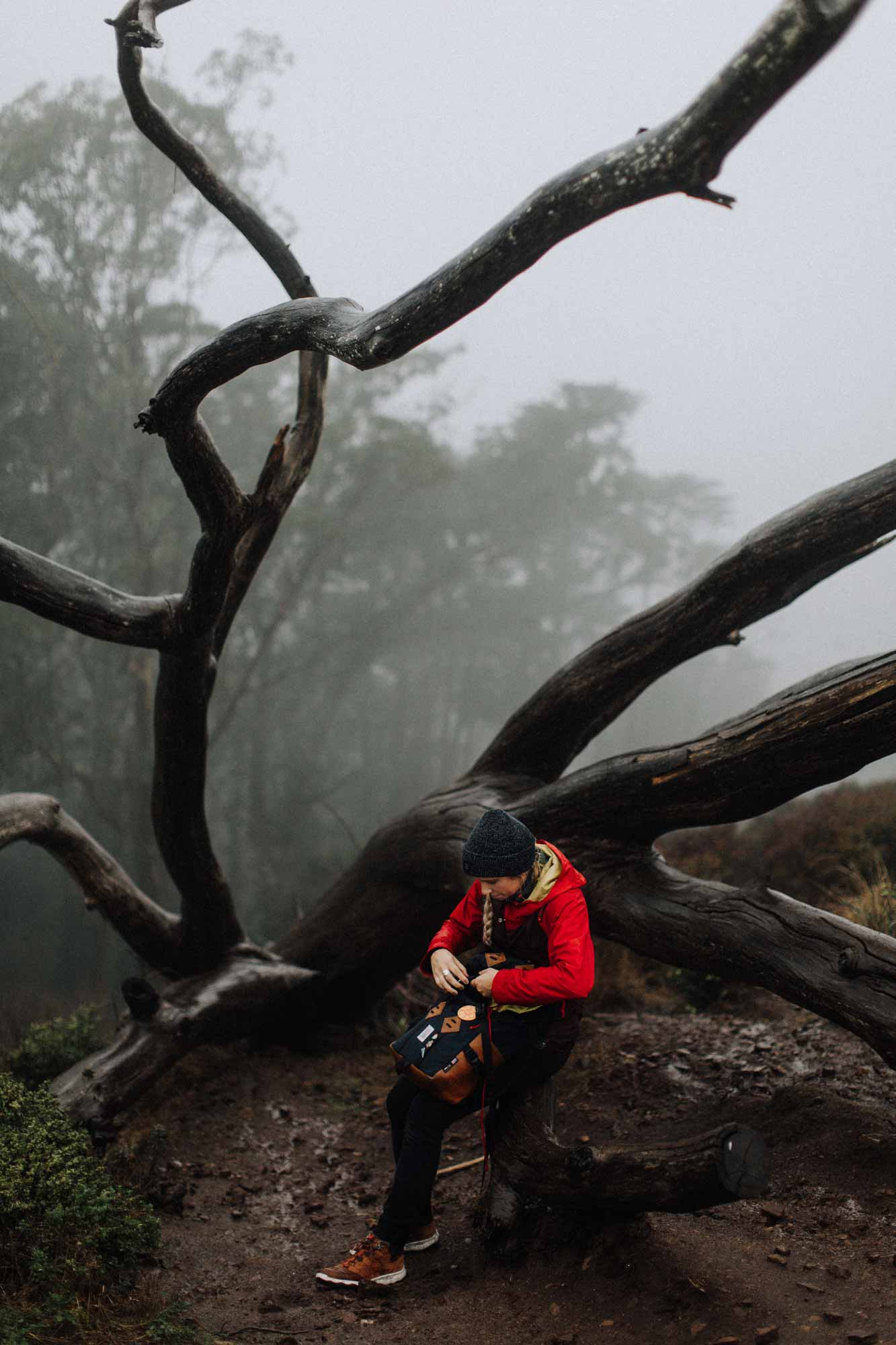 Girl sitting on tree in San Francisco