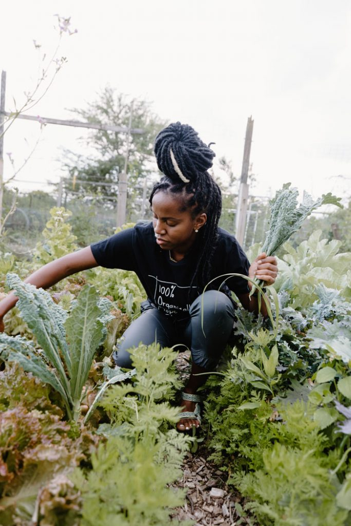 Harvesting kale from the farm.
