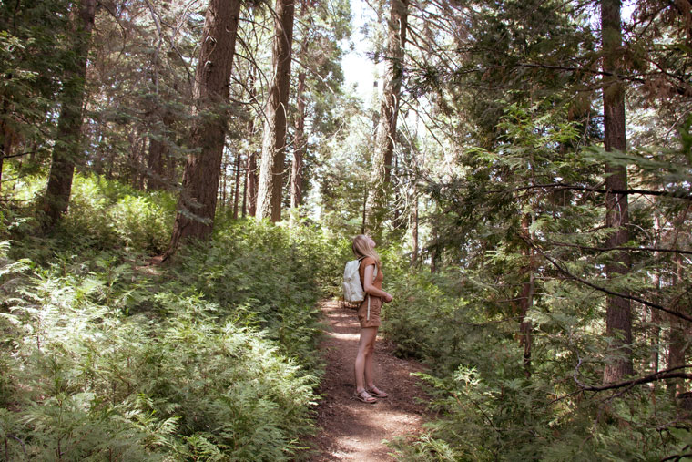 What it's like to go forest bathing.