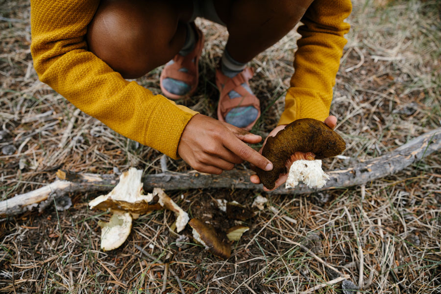 Foraging for mushrooms in Yellowstone National Park.