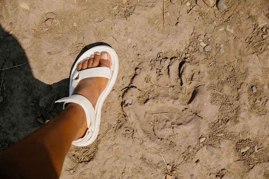 Vanessa compares her foot to a bear paw print.