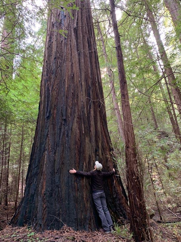 Tree hugging in the redwoods.